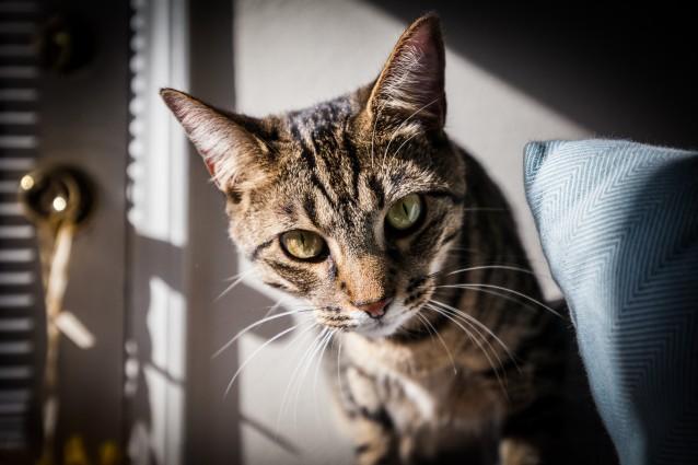 Marshall-Cat